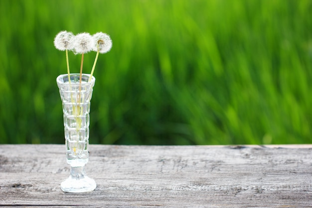 Three faded dandelions in a vase on a green background Premium Photo