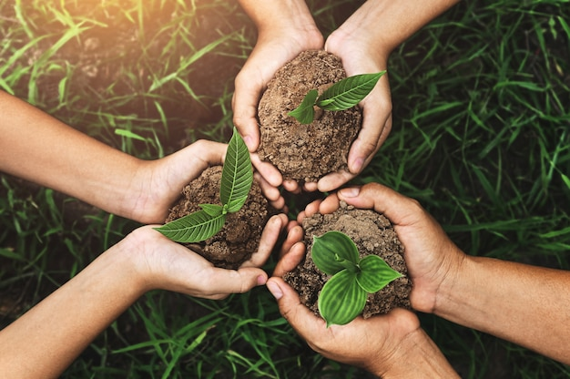 Three hands holding young plant for planting Premium Photo