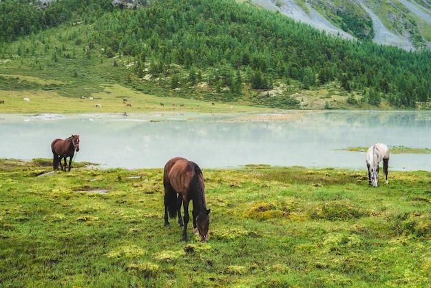 Три лошади пасутся на лугу у реки в горной долине. белые и коричневые лошади на лугах возле горного озера. красивый пейзаж с серыми и коричневыми лошадьми. лес и стадо на противоположном берегу. Premium Фотографии