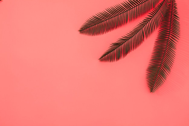 Three palm leaves on coral background Free Photo