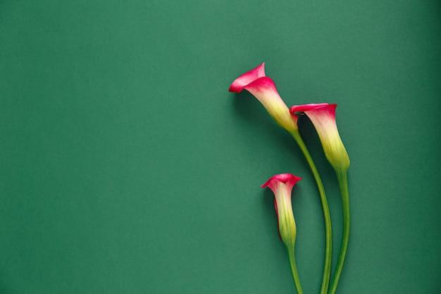 緑のテーブルの上の3つのピンクのカラス Premium写真