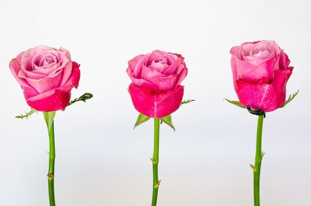 Три розовых розы, изолированные на белом фоне. Premium Фотографии