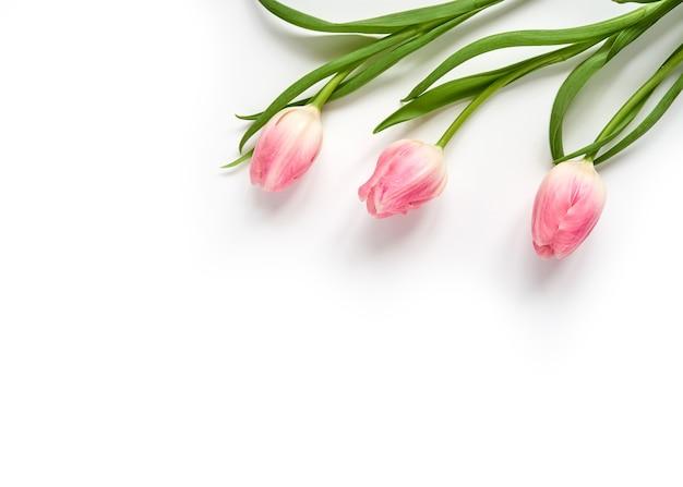 白い表面の右上隅に3つのピンクのチューリップ Premium写真