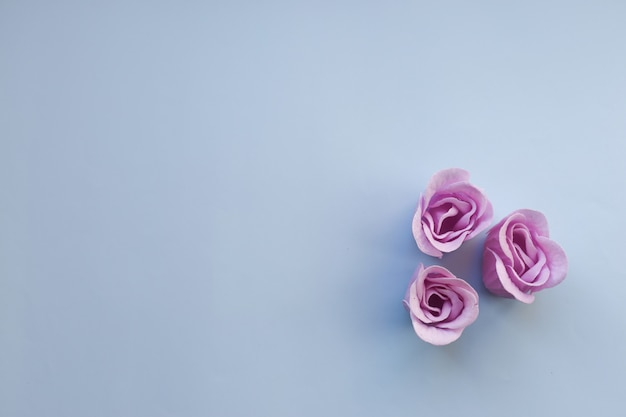 Three purple roses on light blue background with copy space Premium Photo