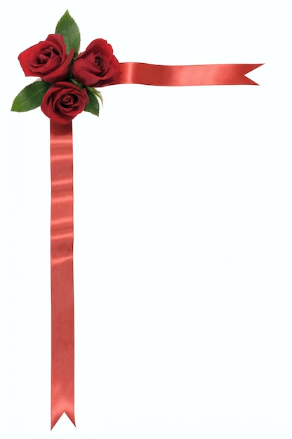 three roses and a red ribbon photo free download