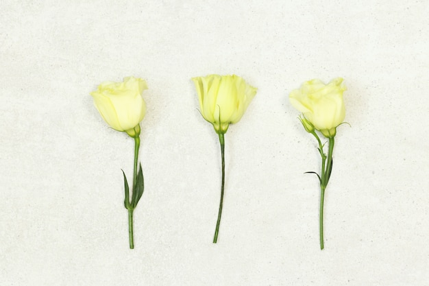 Three roses on grey background Premium Photo