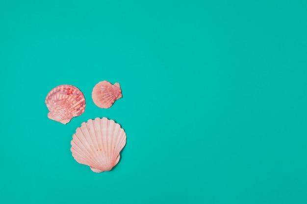 ターコイズブルーの背景に3つのホタテ貝殻 Premium写真