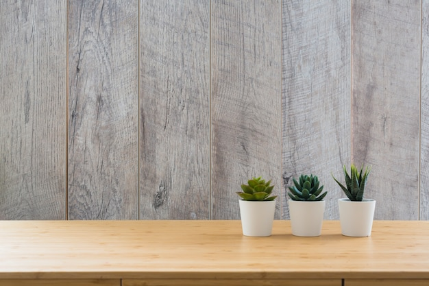 Three succulents small plant in white pots on the desk against wooden wall Free Photo
