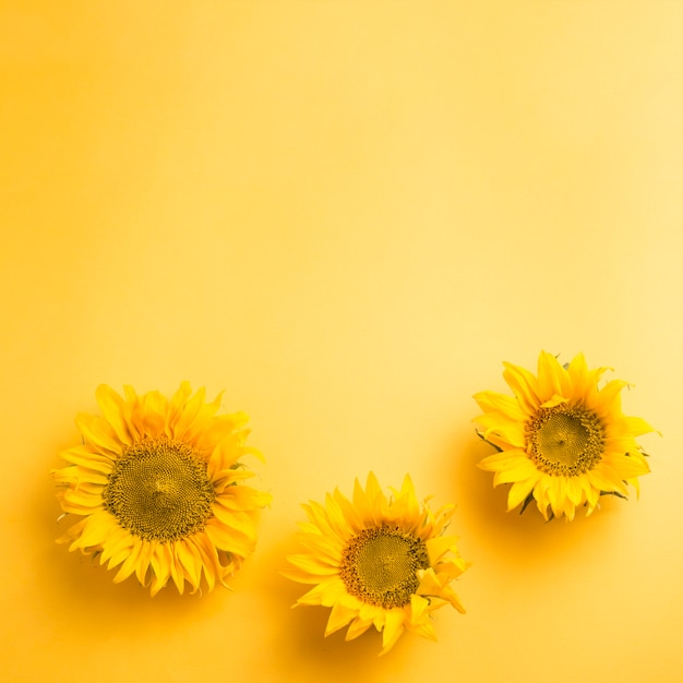 Sunflower thai elit dating