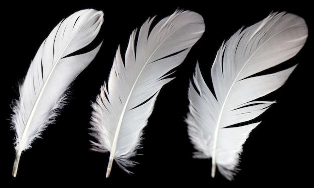 Three white feather isolated on black background. Premium Photo