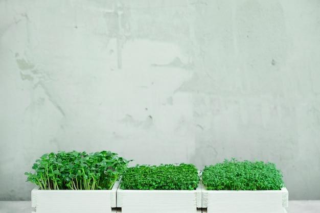 マイクログリーンの3つの白い木箱 Premium写真