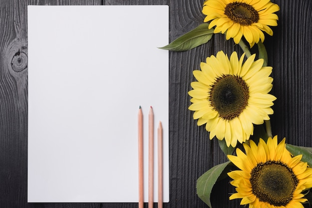 Three wooden colored pencils on blank paper with yellow sunflowers on wooden background Free Photo
