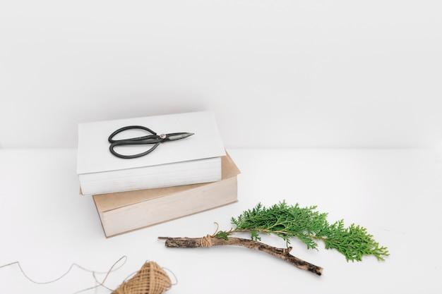 Thujaの小枝と白い背景にスプールと2本のはさみ 無料写真