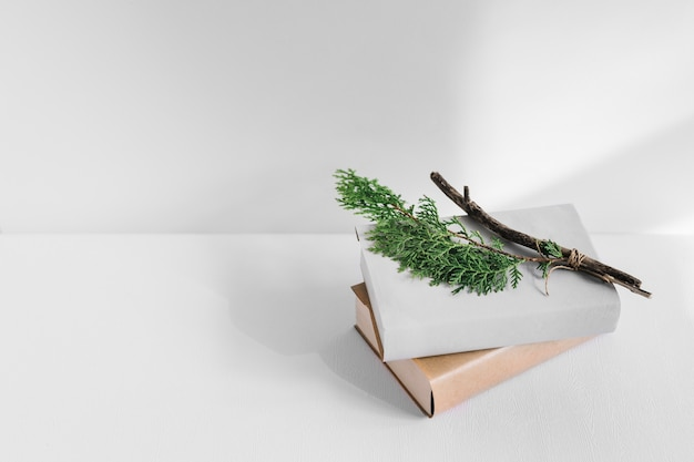 Thuja branch on white and brown books over background Free Photo