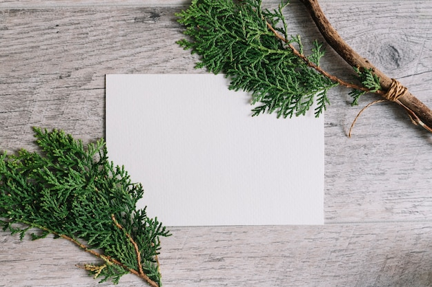 Thuja twigs on white blank paper against wooden textured backdrop Free Photo