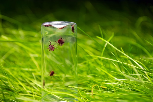 Tick in a glass bottle on a background of grass Premium Photo
