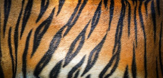 Tiger pattern background / real texture tiger black orange stripe pattern bengal tiger Premium Photo