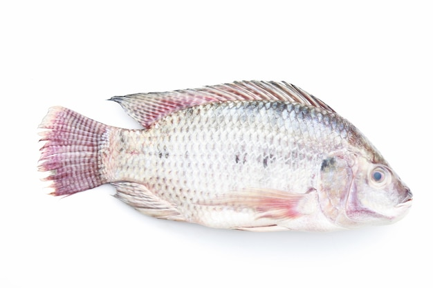 Tilapia on white background Premium Photo