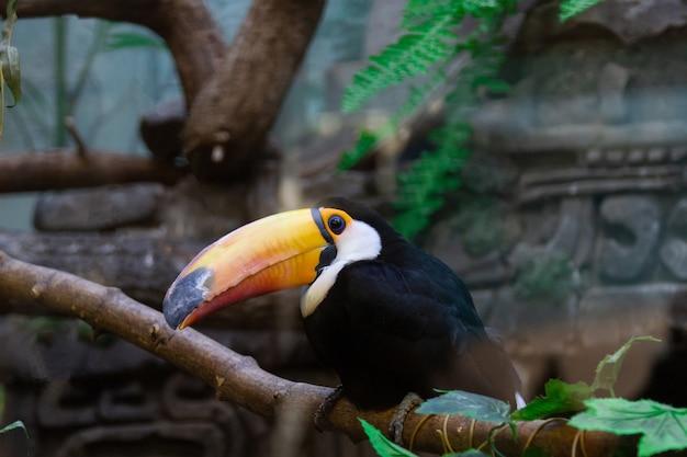 動物園でランパストスのtoco Premium写真