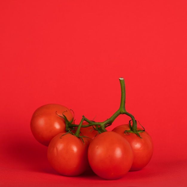 Tomatoes on the branches with red background Free Photo