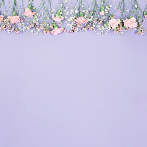 Top border decorated with limonium; gypsophila and carnations flowers on purple backdrop Free Photo