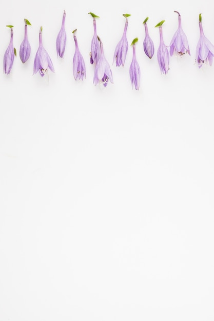 purple flower top border flowers healthy