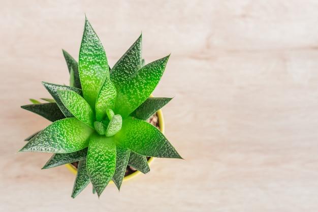Top view of aloe vera plant in yellow ceramic pot, houseplant, domestic gardening. Premium Photo