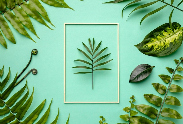 Top view arrangement of green leaves with empty frame Free Photo