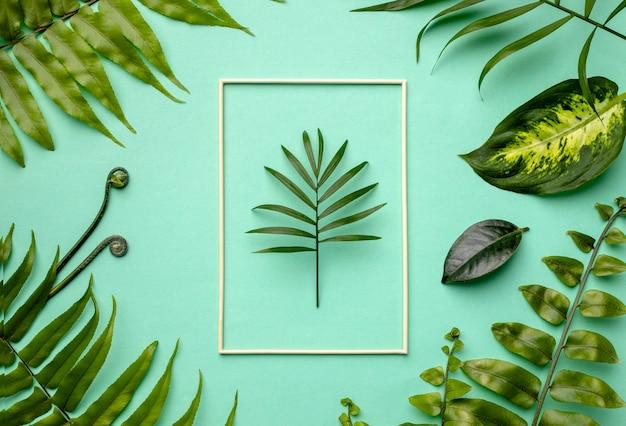 空のフレームと緑の葉の上面図の配置 無料写真