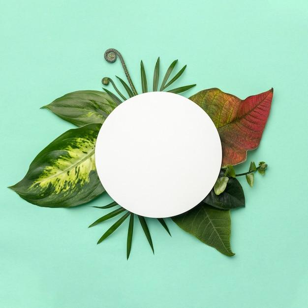 둥근 개체와 잎의 평면도 배열 무료 사진
