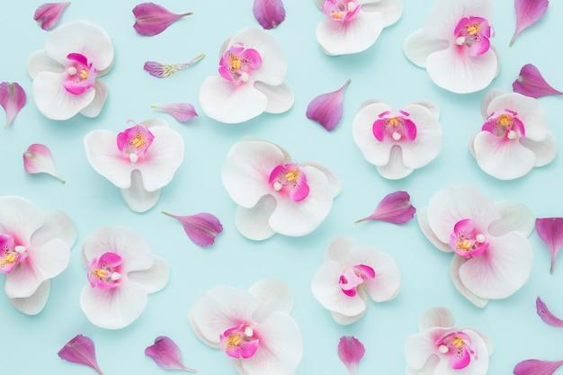 ピンクの蘭の花のトップビューの配置 無料写真