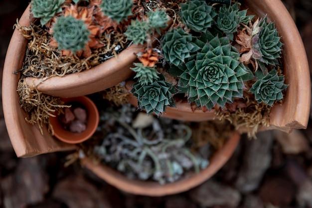 Top view arrangement with flowers in broken pot Free Photo