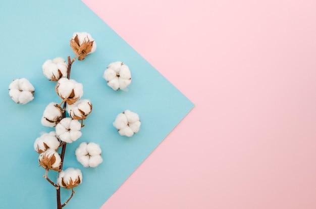 Top view arrangement with small cotton flowers Premium Photo