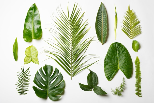 Top view assortment of natural leafs concept Premium Photo