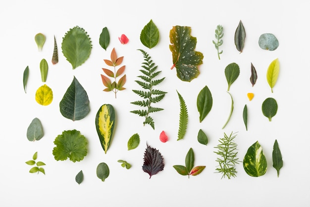 Top view assortment of nature leafs Premium Photo