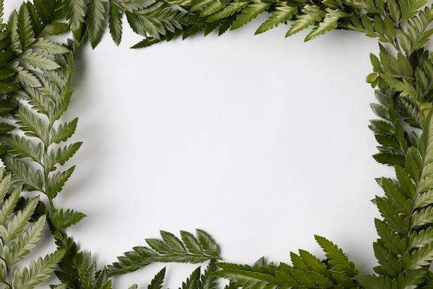 Вид сверху ассортимент зеленых листьев с копией пространства Бесплатные Фотографии