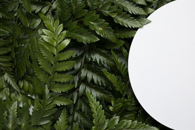 Вид сверху ассортимент зеленых листьев с рамкой Premium Фотографии