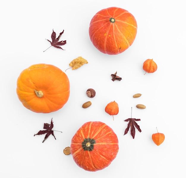 Top view autumn arrangement with pumpkins and acorn Free Photo