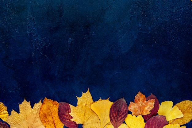 Top view of autumn leaves on blue background Premium Photo