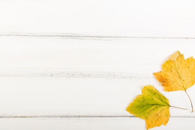 Top view autumn leaves on wooden background with copy space Free Photo