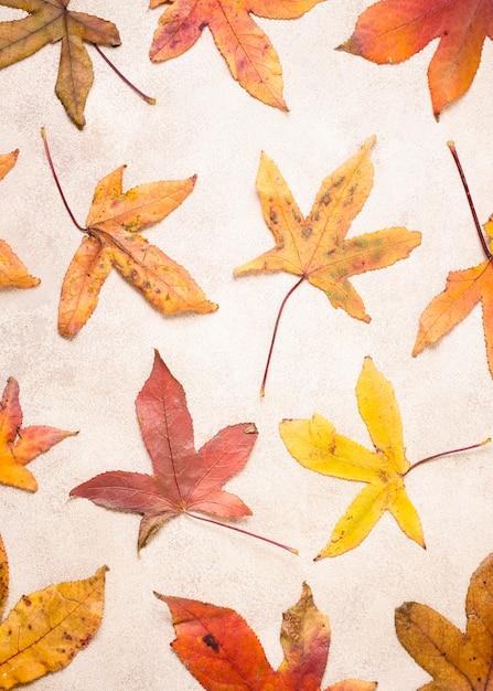 Vista dall'alto di foglie d'autunno Foto Gratuite