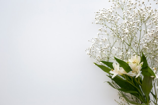 Top view of baby's breath and white lilies flower above white background Free Photo