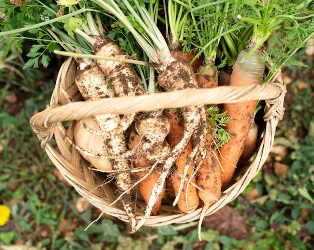 Top view basket with carrots and parsnip Free Photo