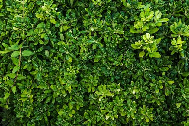 녹색 단풍의 상위 뷰 아름다운 배열 프리미엄 사진