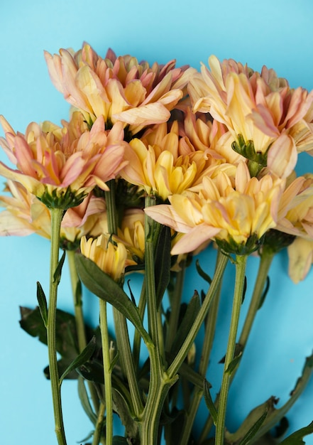Top view beautiful flowers on blue background Free Photo