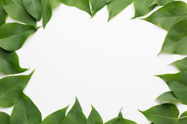 Top view of beautiful lilac leaves frame concept Premium Photo