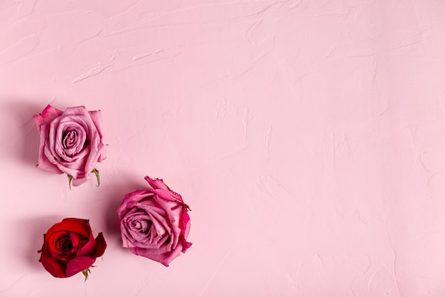 Top view of beautiful roses Free Photo