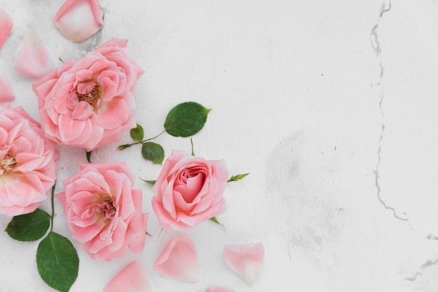Top view of beautiful spring roses with petals and marble background Free Photo