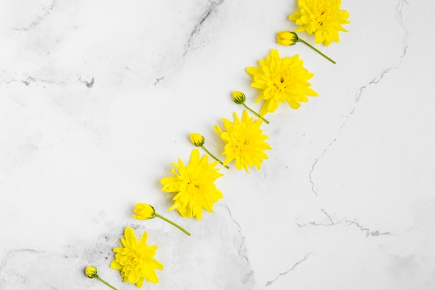 Top view of beautifulo spring daisies with marble background Free Photo