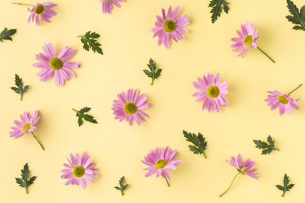 上面図咲く花 無料写真